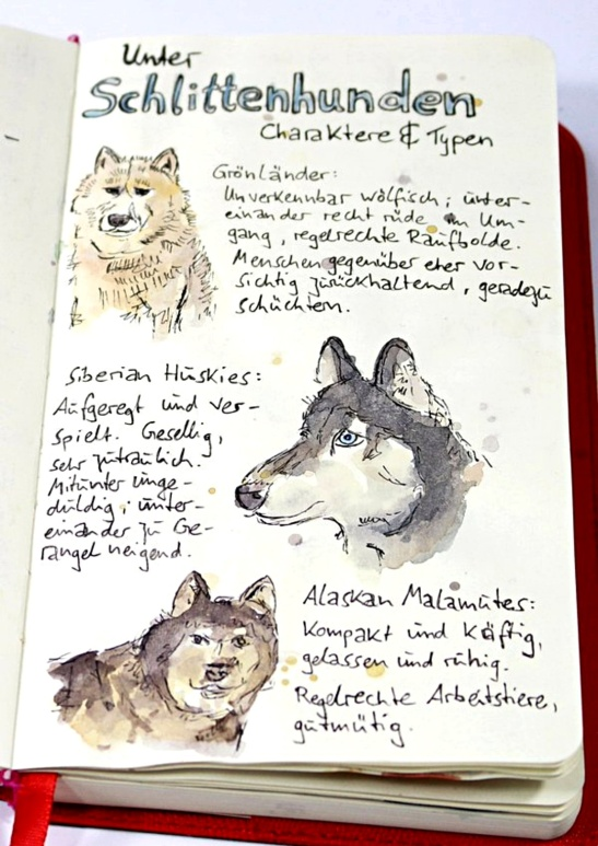 among sledge dogs